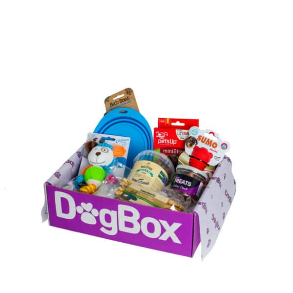 dogbox låda fylld av hundprodukter